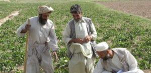 Soy Farmers